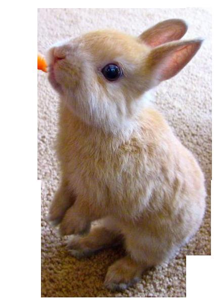 ウサギとは