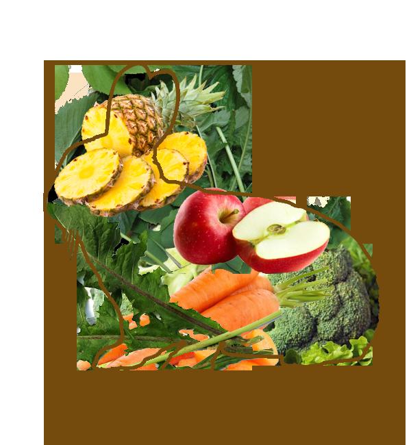 ウサギの食事